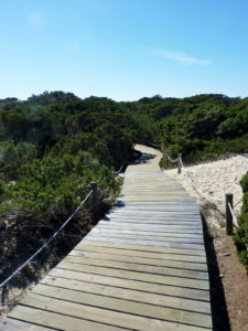 Chemin a travers les dunes