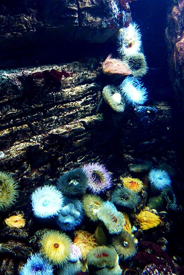 Oceanarium lisbonne
