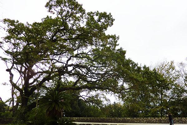 parc regaleira sintra