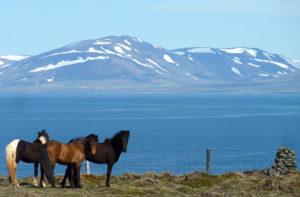 islande chevaux mer