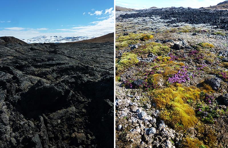 lave nature islande