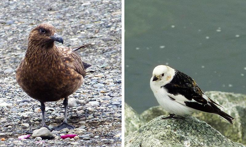 oiseaux jokulsarlon islande