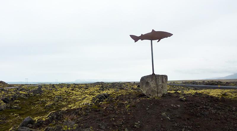 islande requin
