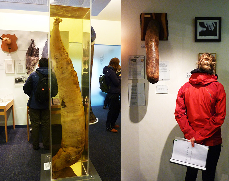 musée sexe phallus islande