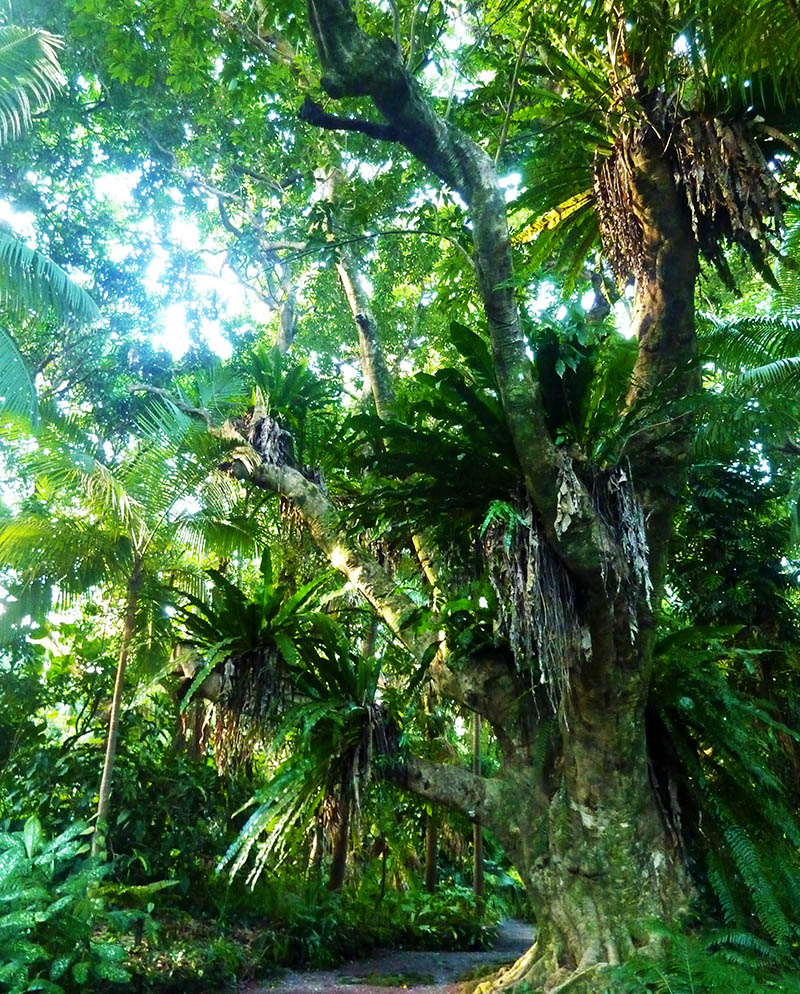 reunion arbre jardin parfums epices