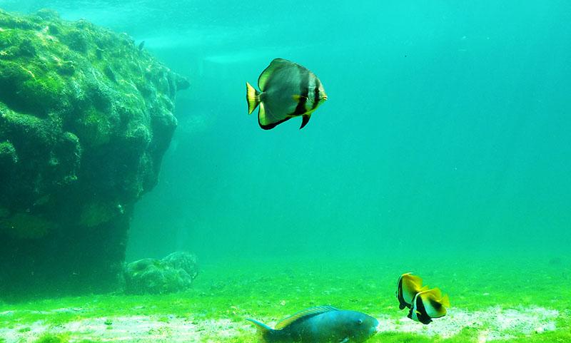 kelonia aquarium
