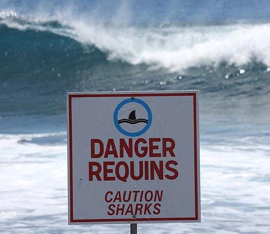 reunion requins