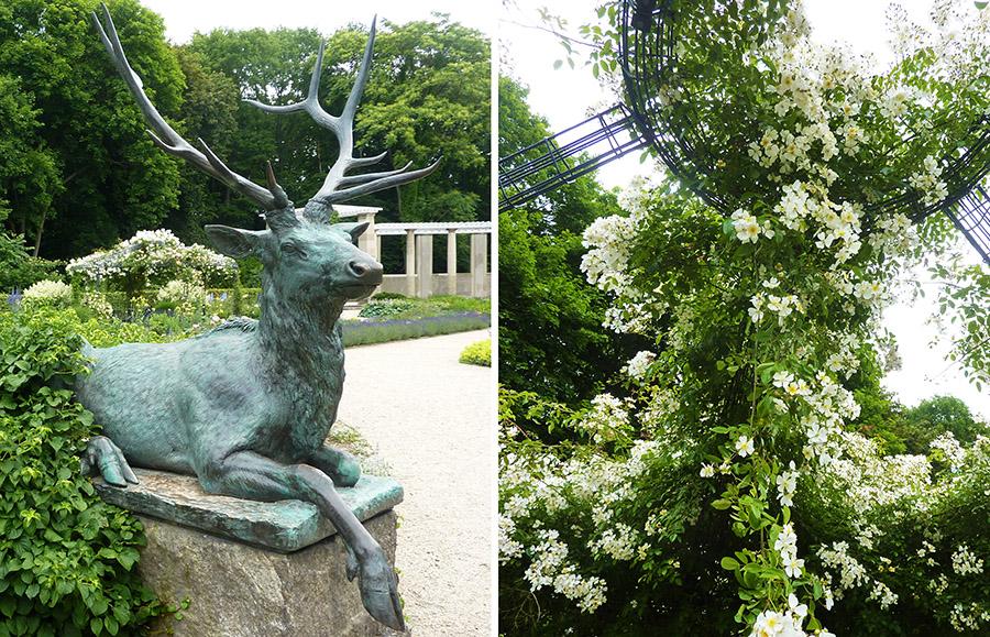 tiergarten rose jardin