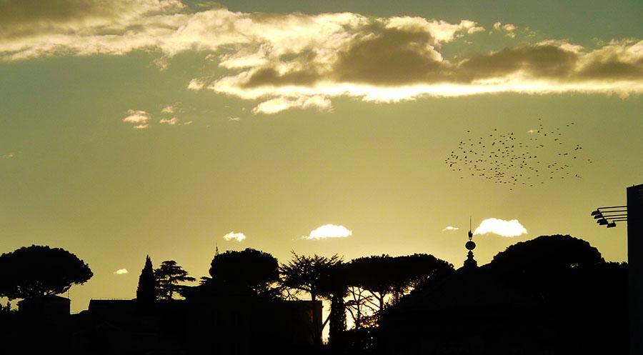 rome oiseaux