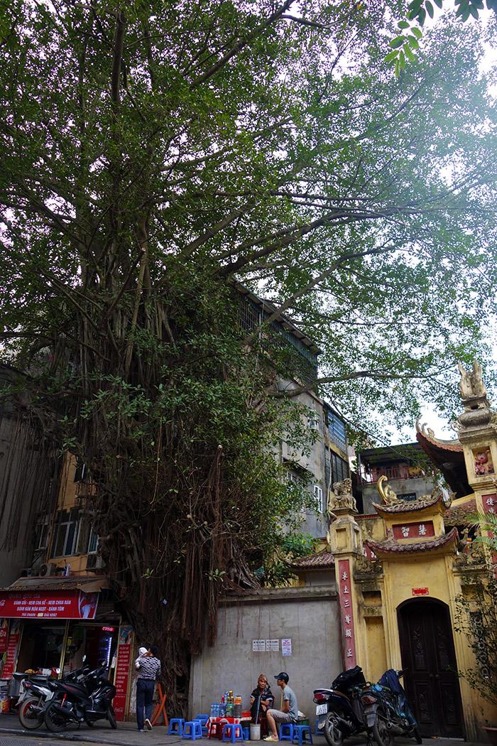 vietnam hanoi rue arbre