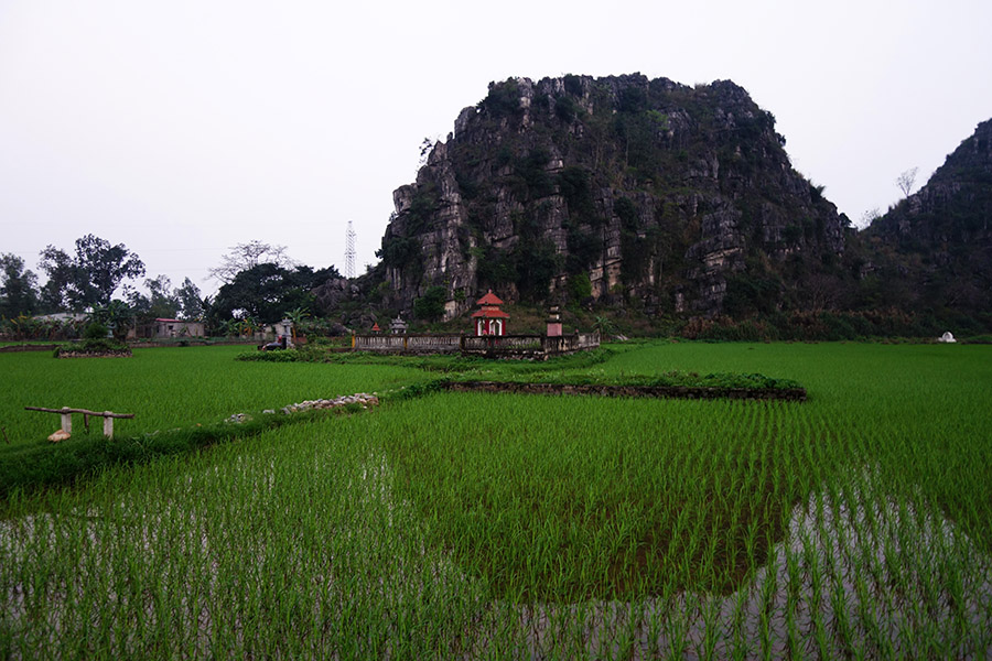 vietnam tam coc riziere