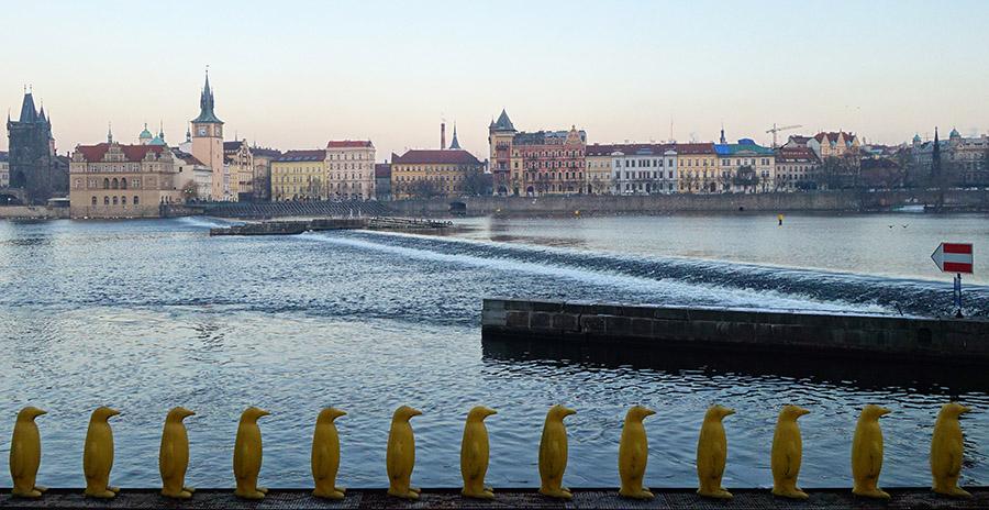 prague pingouins jaunes