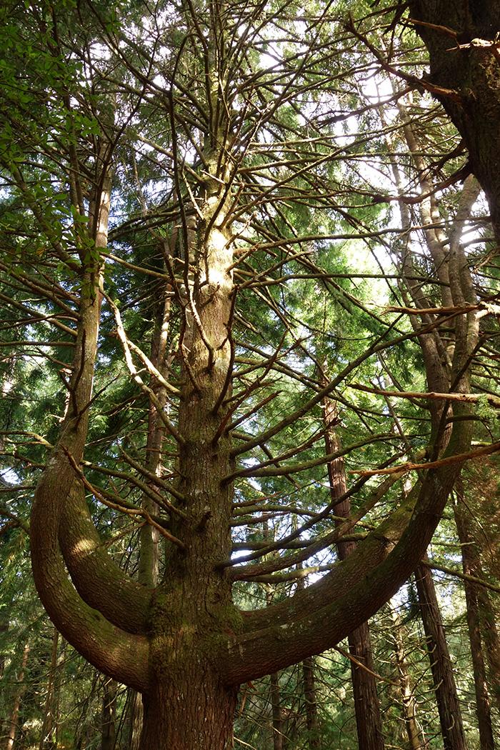 madere caldeirao verde randonnee arbre