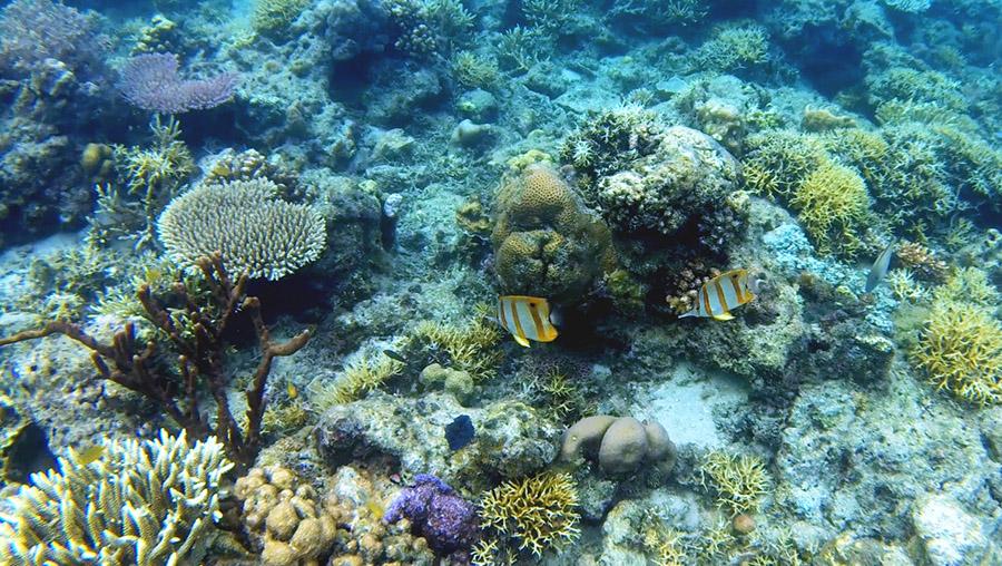 indonesie palau bidadari angel island snorkeling