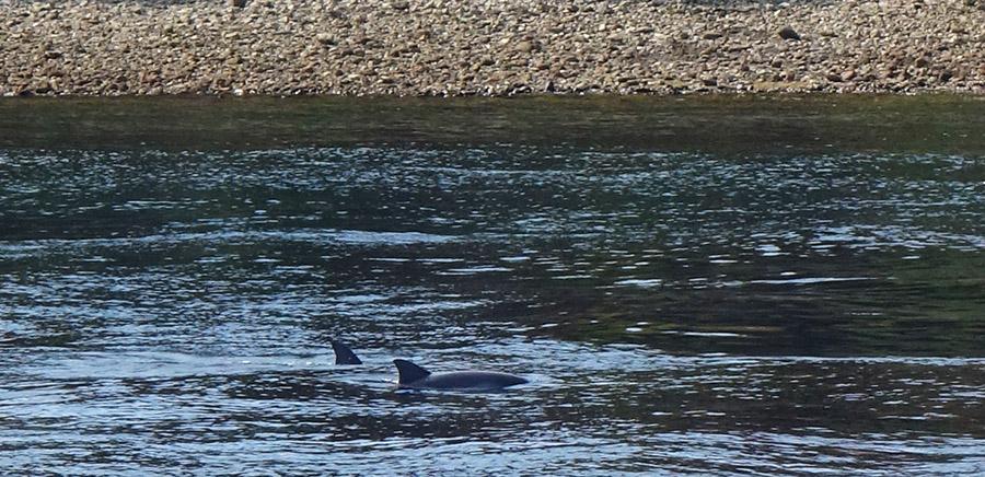 indonesie rinca komodo mer dauphins