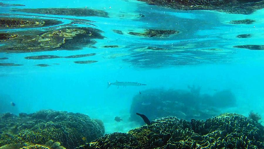indonesie komodo kanawa snorkeling corail poissons