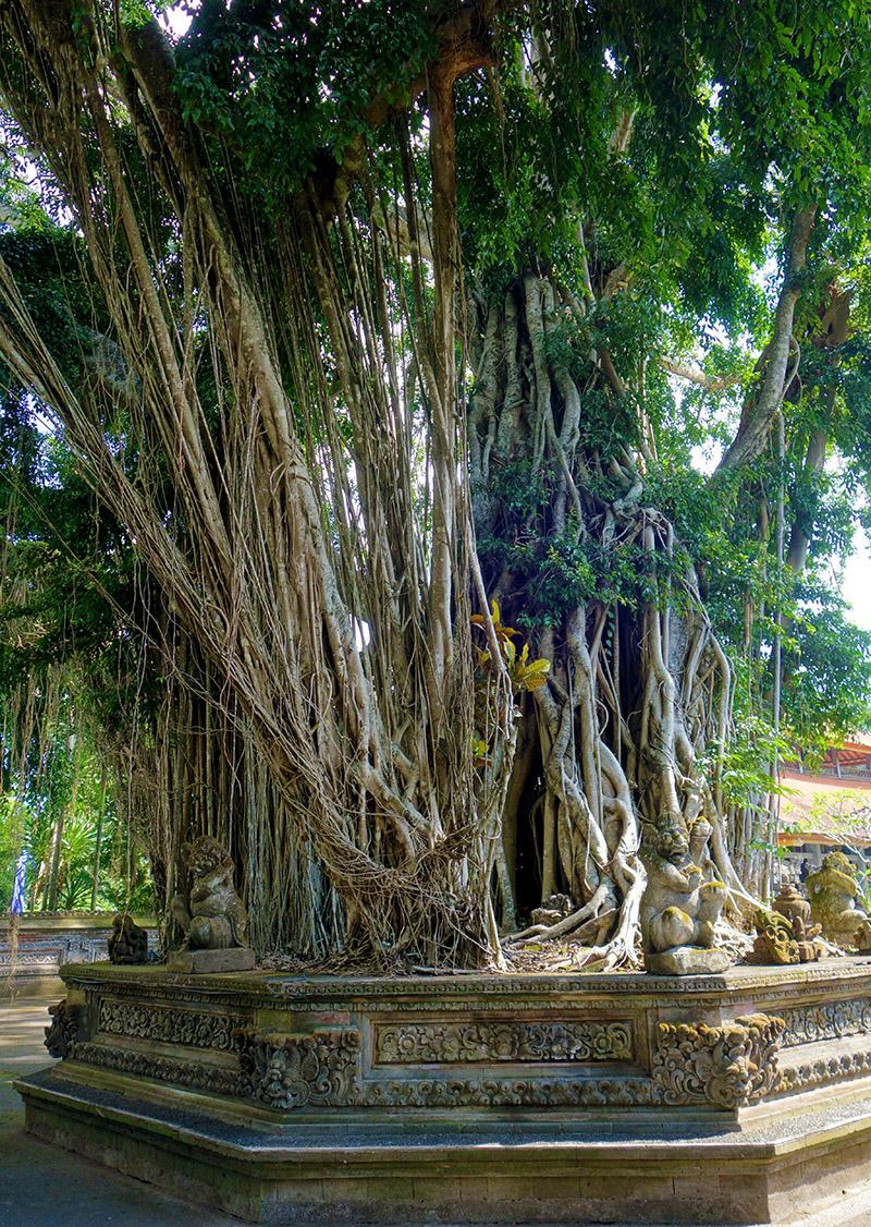 indonesie bali temple ubud pura dalem arbre