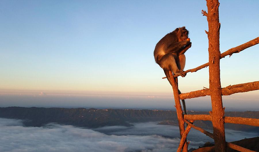 indonesie bali trek trekking rando mont volcan batur agung sunrise lever soleil singe monkey
