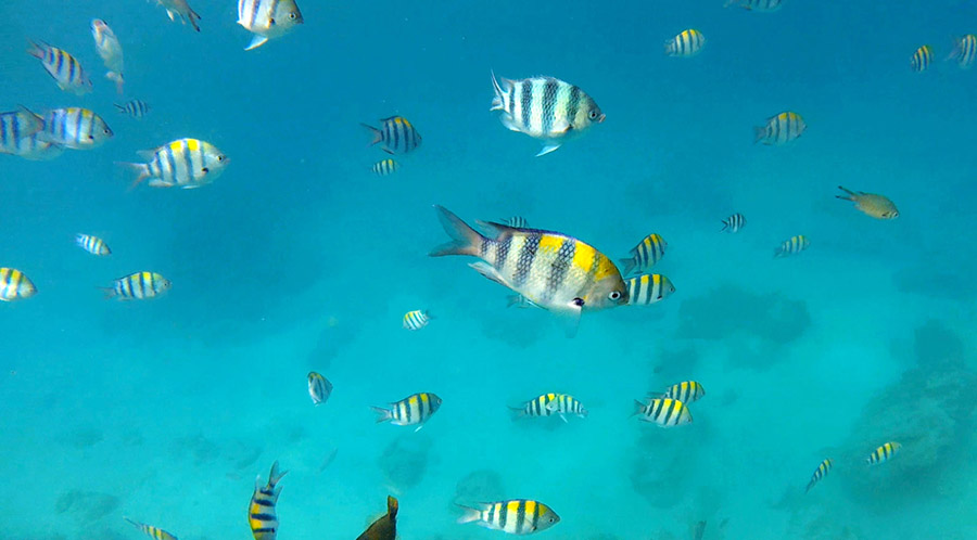 gili air snorkeling tour poissons