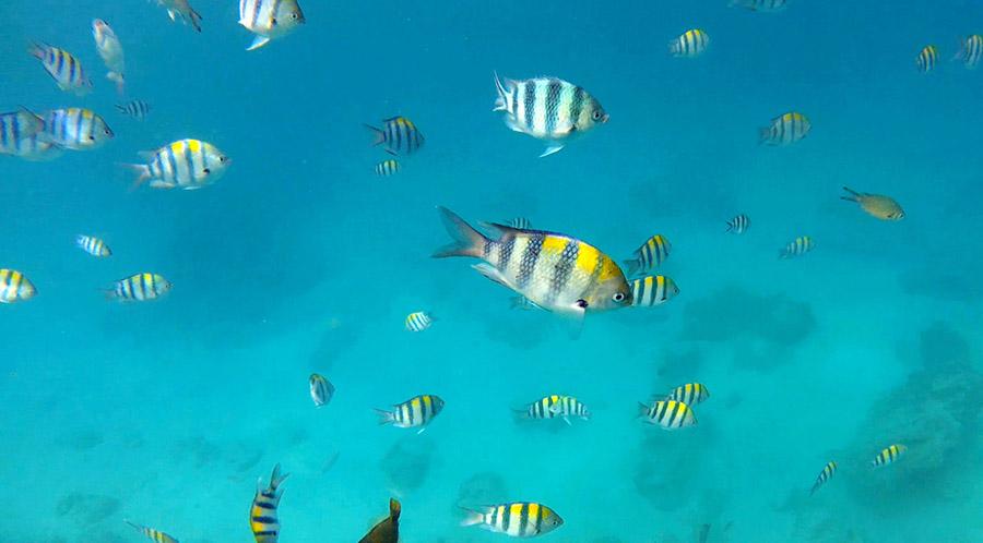 gili air snorkeling tour poissons
