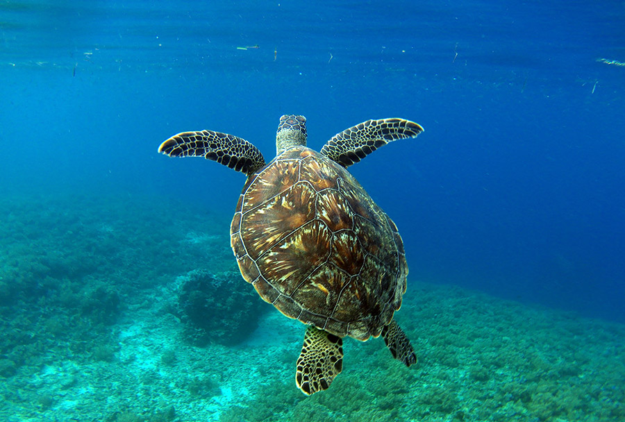 indonesie gili air snorkeling tour turtle tortue
