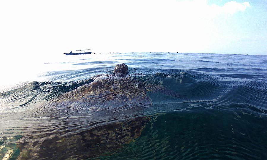 indonesie gili air snorkeling tour turtle tortue