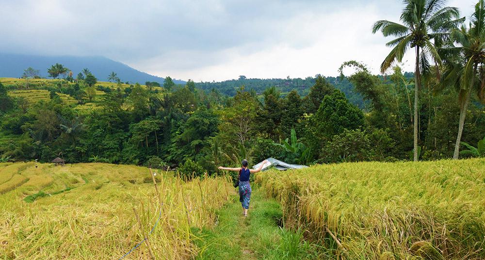 indonesie bali jatiluwih riziere rice field