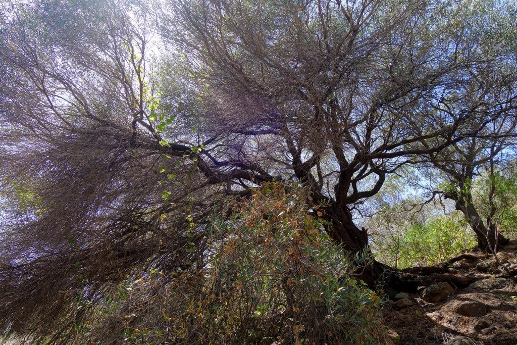 gran canaria canaries barranco de los cernicalos randonnée rando trekk balade nature olivier