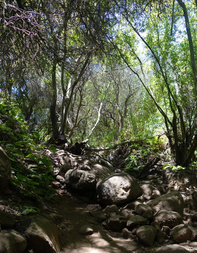 gran canaria canaries barranco de los cernicalos randonnée rando trekk balade nature