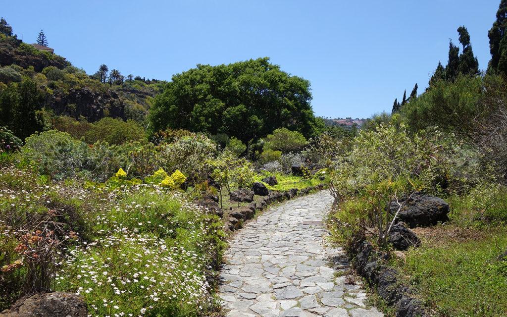 gran canaria canaries jardin botanique viera y calvijo nature balade plantes arbres fleur cactus